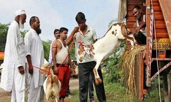 Peta India on bakrid