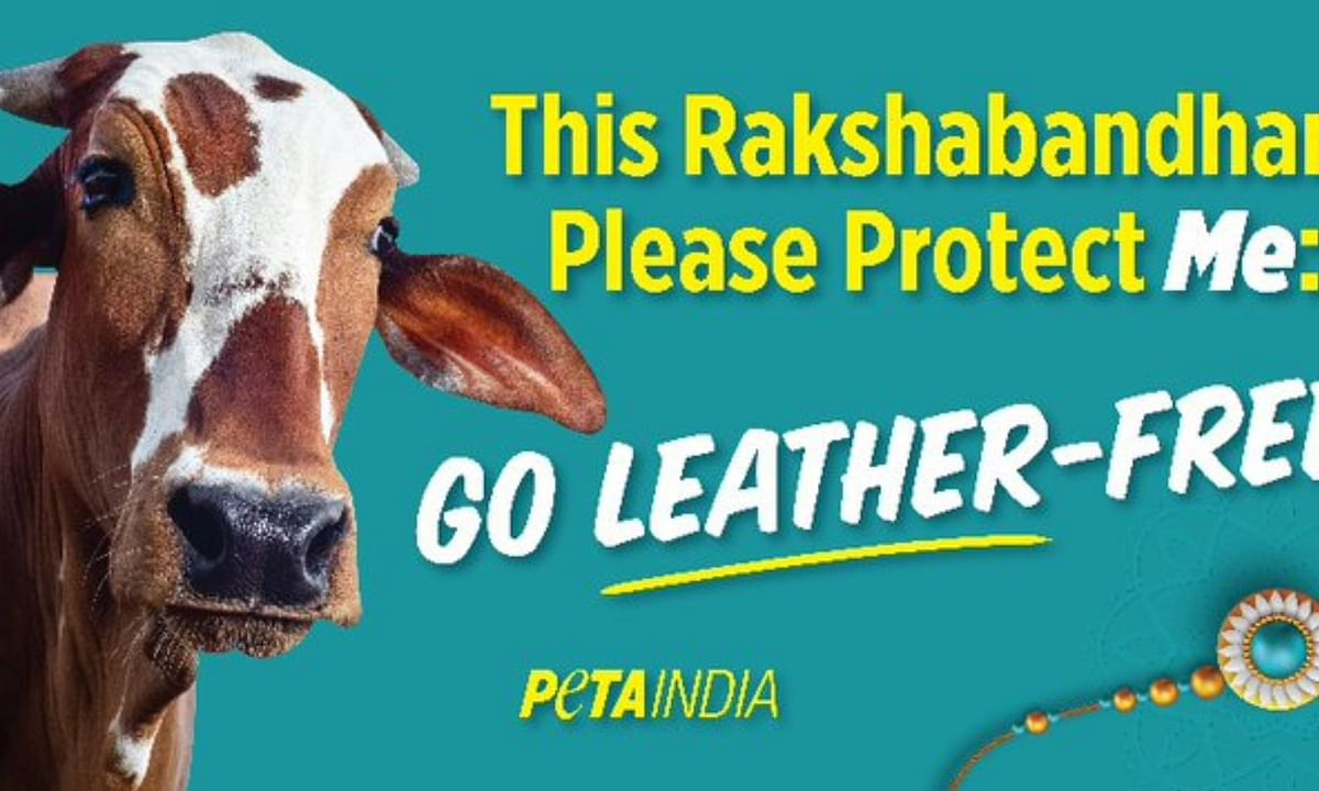 Peta india Tweet to protect cow on Rakshabandhan