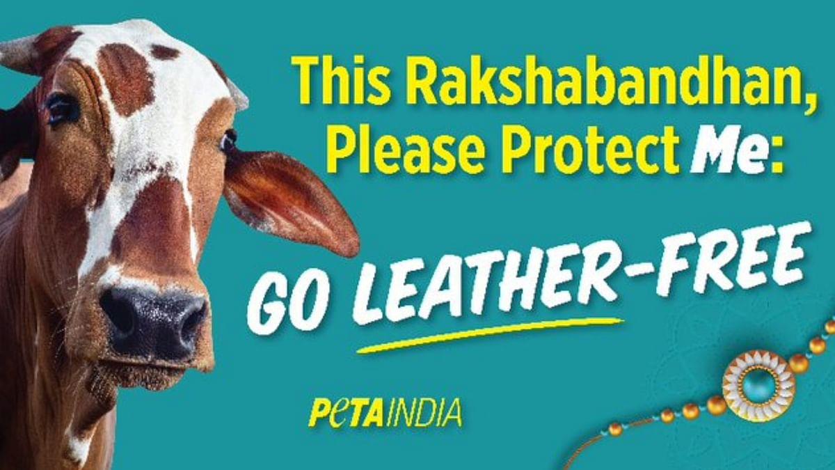 Peta india Tweet to protect cow on Rakshabandhan