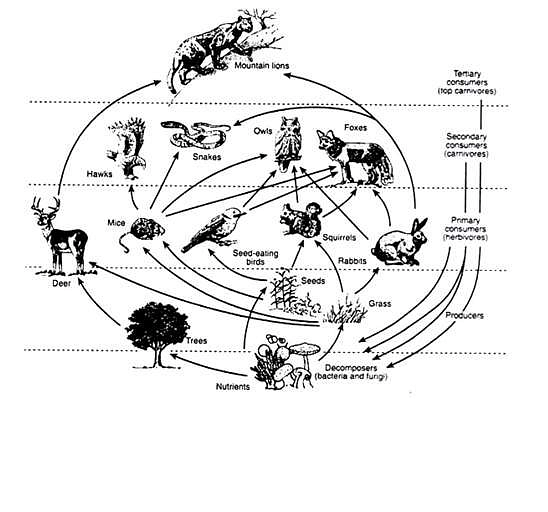 • Food Web of a Terrestrial Ecosystem.
