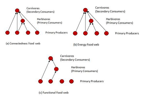 • Types of Food Web