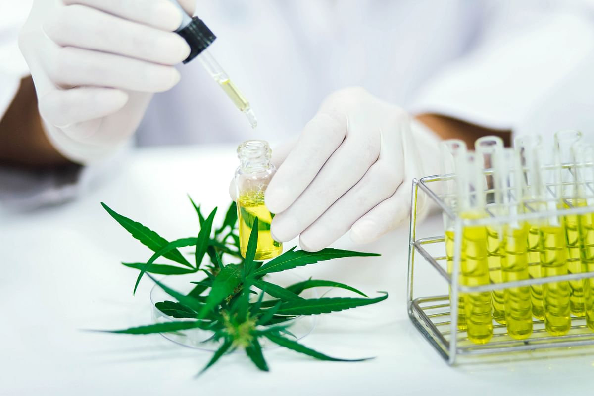 Researchers Looking At CBD To Treat COVID-19 Lung Inflammation