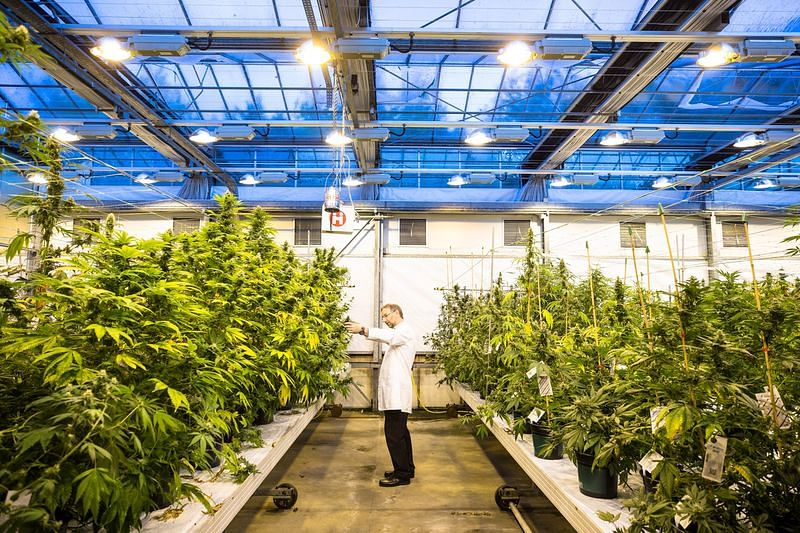 Jazz Pharma to Buy Cannabinoid-Drug Maker for $7.2 Billion
