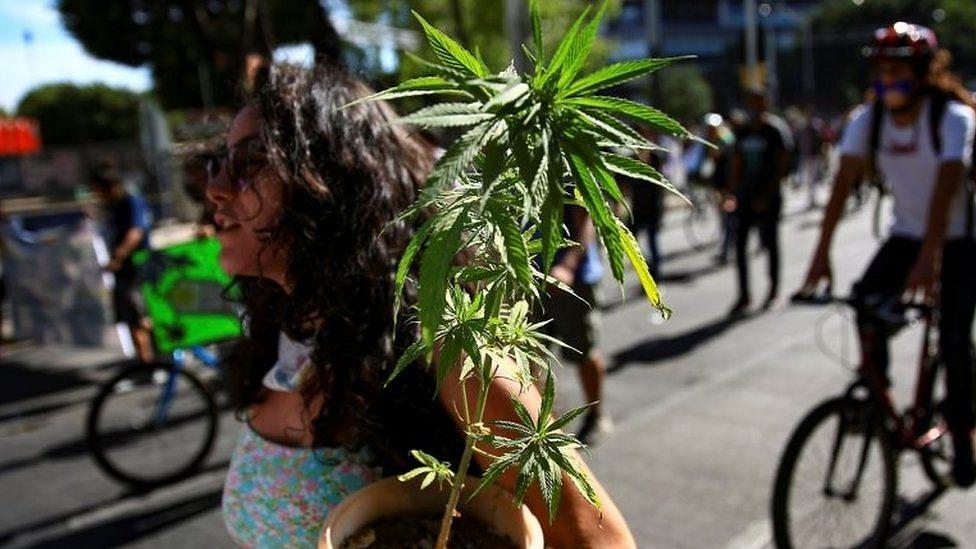Mexico marijuana: Lower house passes recreational cannabis bill