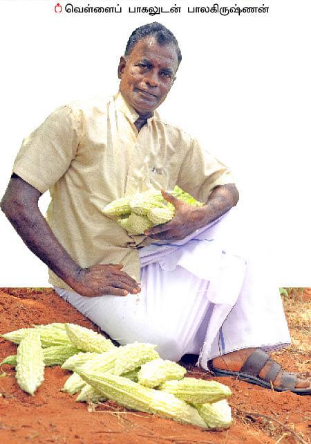 15 சென்ட்...  150 நாள்... 70 ஆயிரம் ரூபாய் லாபம்!