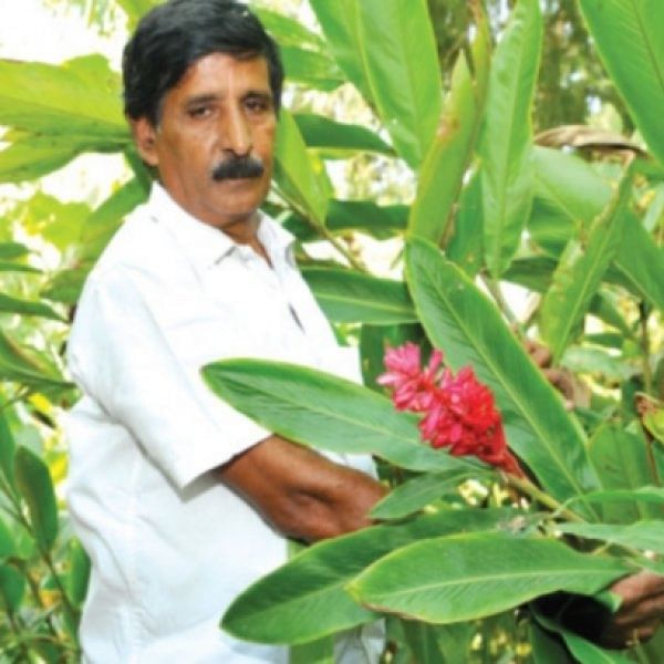 70 Bags of paddy in an acre...A Success story of Nagarathina Naidu! - (Part 2)