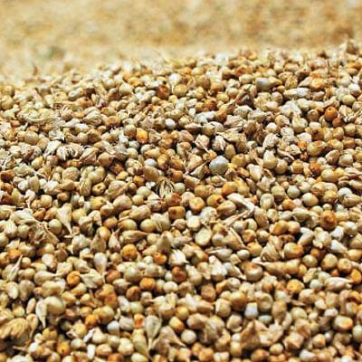 நாட்டுக்கம்புக்கு நல்ல விலை... குவிண்டால் 4,500 ரூபாய்!