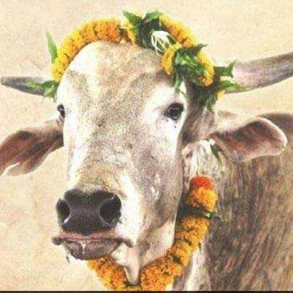 இளவரசருக்குத் திருமணப் பரிசாக 'காளை'  - பீட்டாவின் யூனிக் கிஃப்ட்