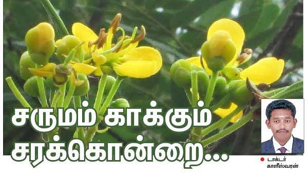 சருமம் காக்கும் சரக்கொன்றை...