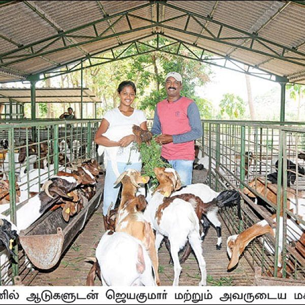 Wonderful Profit by Goat Rearing... 160 goats, Rs 17 lakhs per annum!