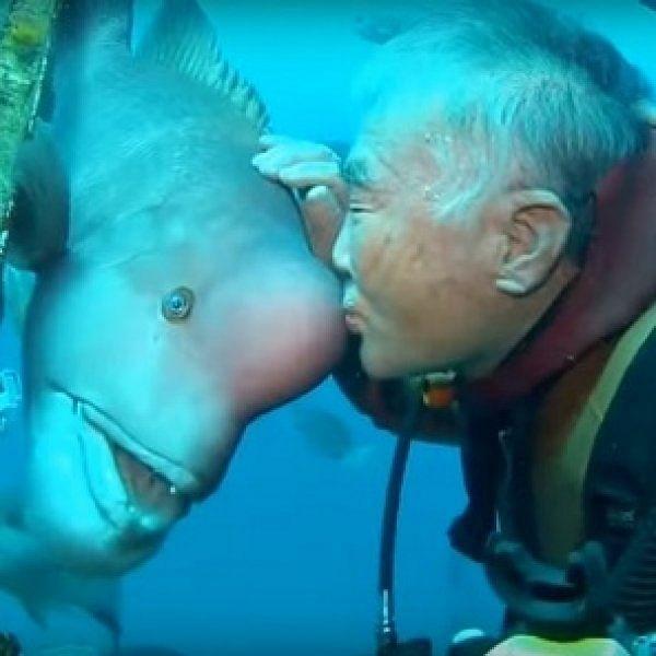 இந்த ஜப்பான் முதியவருக்கும் ஆழ்கடல் மீனுக்கும் 30 ஆண்டுகால நட்பு என்றால் நம்புவீர்களா?