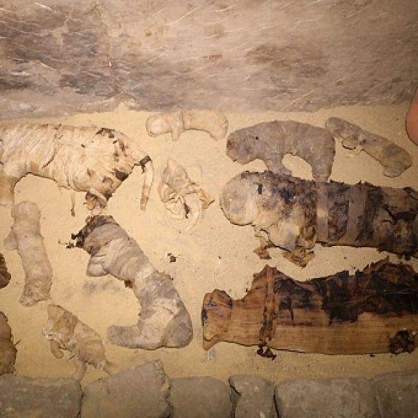 6,000 ஆண்டுகளுக்கு முந்தைய பூனைகள்! - எகிப்தில் கண்டுபிடிக்கப்பட்ட ஏழு கல்லறைகள்