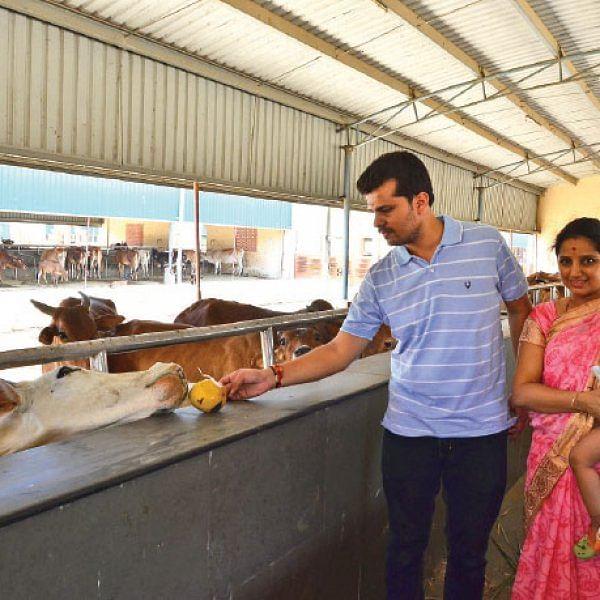 சென்னையில் ஒரு பிரமாண்ட பசுமடம்! - 12 ஏக்கர்... 2,000 மாடுகள்...