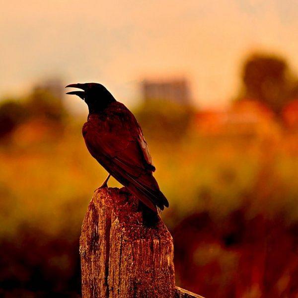 வழக்கமா பறவைகளைப் பார்க்குற மாதிரியே இன்னைக்கும் பார்க்காதீங்க...ஏன்னா! #EndemicBirdDay