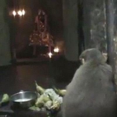வைத்தீஸ்வரன் கோயிலில் அம்மனை வழிபட்ட குரங்கு: பக்தர்கள் ஆச்சர்யம் (வீடியோ)