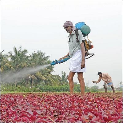 15 சென்ட் நிலம்...  ஒரு மணி நேர வேலை... தினசரி ரூ 750 லாபம்!