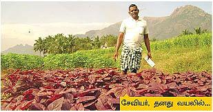 4 சென்டில் மாதம் ரூ.4,000...