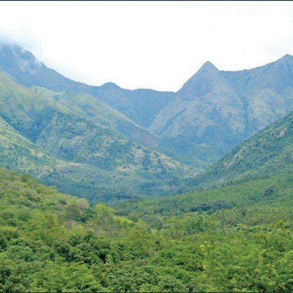மரம் செய விரும்பு! - 21 - 'மேதகு' மேற்குத் தொடர்ச்சி மலை...