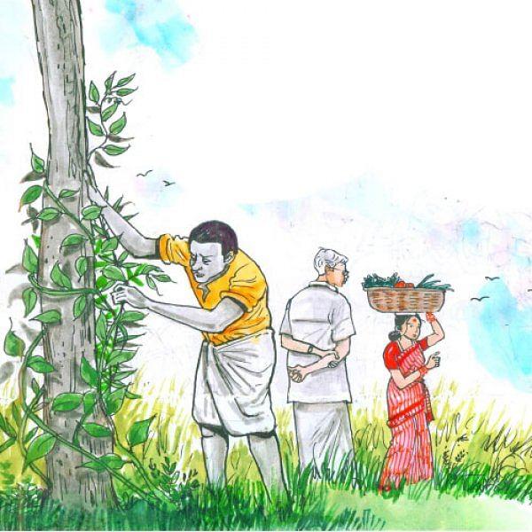 மரத்தடி மாநாடு: தென்னை மானியம்... இழுத்தடிக்கும் அதிகாரிகள்... கவலையில் விவசாயிகள்!