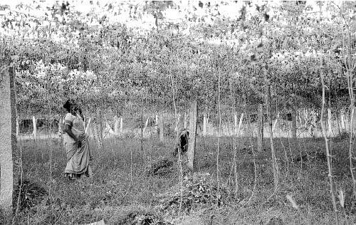 ஆடிப்பட்டம் தேடி விதை... வகை வகையாய் காய்கறிகள்...வளமான வருமானம்!