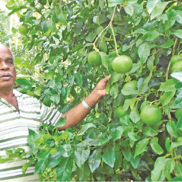 மலைக்க வைக்கும் மலை விவசாயம் - 2 ஏக்கர்...  ஆண்டுக்கு ரூ 5.7 லட்சம் வருமானம்