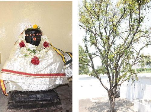 சர்ப்ப தோஷங்கள் நீங்கும்... சந்தோஷம் பெருகும்!