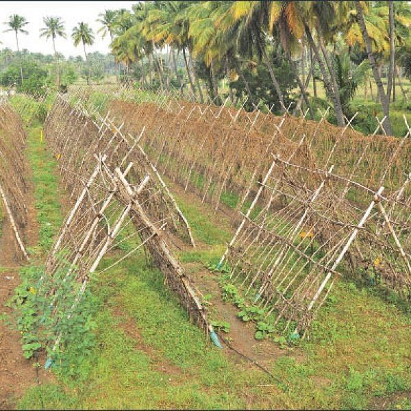 Solid Returns from Pandal Vegetables... Success story of a farmer!