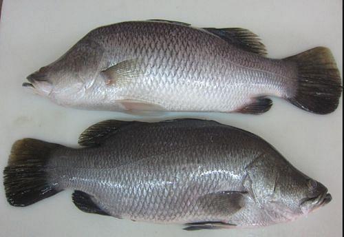 மீன்களில் எது ருசியானது... தெரிஞ்சுக்கலாமா? | Which is the most tasty fish?