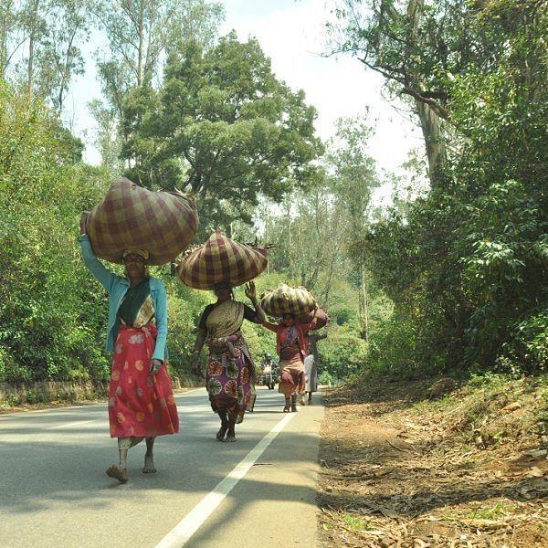 நீலகிரி பெண் தொழிலாளர்கள்