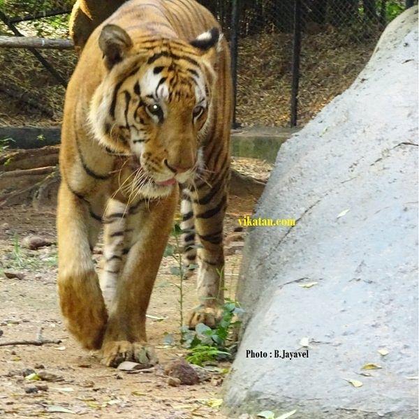 ஆகஸ்ட் 15-ம் தேதி வண்டலூர் உயிரியல் பூங்கா திறந்திருக்கும்!
