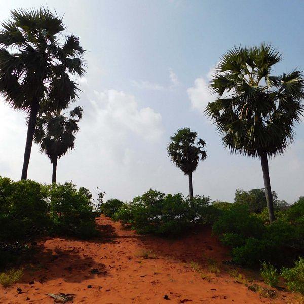 தேரிக்காடு