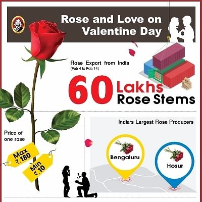 Rose and Love on Valentine Day #VikatanInfographic