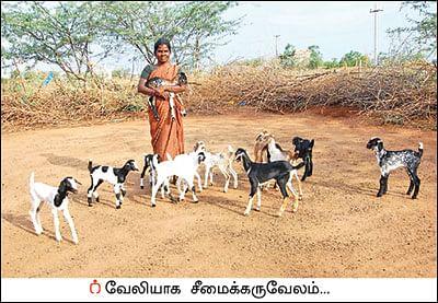 சீமைக் கருவேலமரம்... அத்தனை ஆபத்தானதா?