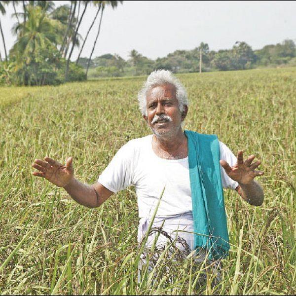 இயற்கையில் கலந்த 'நெல்' கிருஷ்ணமூர்த்தி!