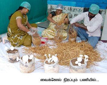 மாதம் ரூ.3 லட்சம்... பலே வருமானம் தரும் பால் காளான்...!