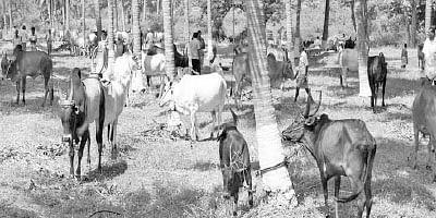 காட்டுயானம், காலா நமக்... பாரம்பர்ய ரகத்தில் சாதனை படைக்கும் இளைஞர்கள்!