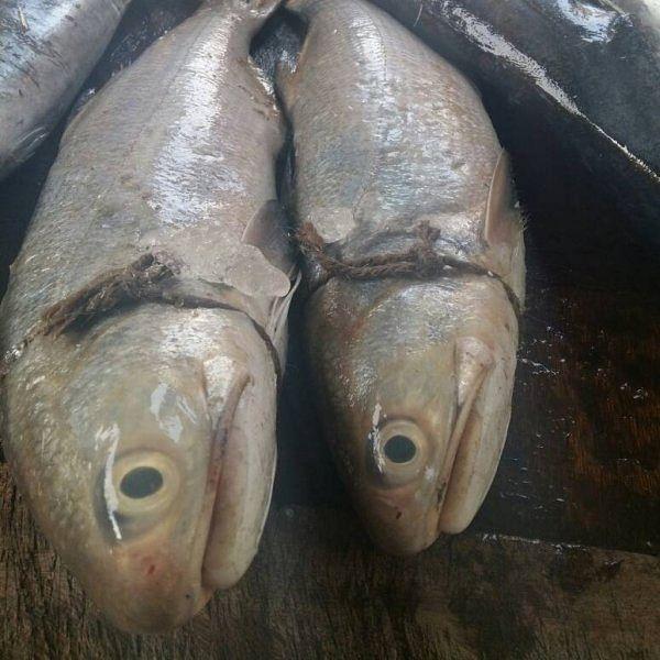 ஆண் மீனைவிட பெண் மீனைத்தான் சாப்பிடவேண்டும். ஏன்.. எப்படி?