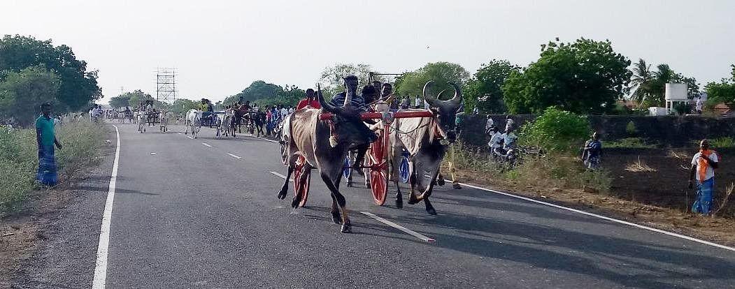 ரேக்ளா போட்டியில் அதிர்ந்த 5 மாவட்ட காளைகள்! முதல் பரிசை வென்றது ராமநாதபுரம் காளை