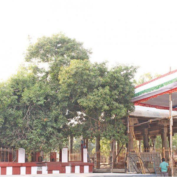 கல்யாண வரம் அருளும் - மகிழ மரத்தடி சேவை