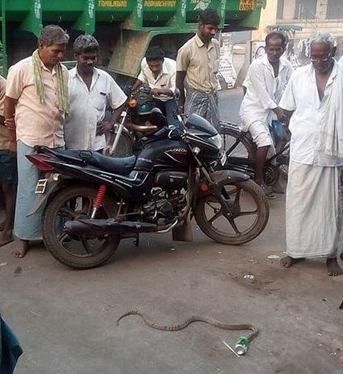 லிம்கா குடிக்க ஆசைப்பட்ட நல்லபாம்புக்கு நேர்ந்த கதி!