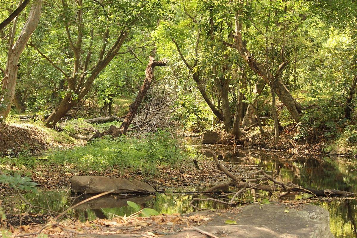 காட்டுத் தீ இயற்கையா... செயற்கையா?! - கானுயிர் ஆர்வலர்களின் விவாதம் #KuranganiForestFire