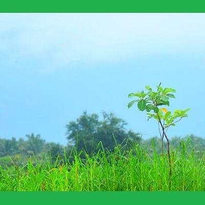 வழிகாட்டுகிறது தருமபுரி... குப்பை மேட்டை, ஏரியாக மாற்றிய இளைஞர்கள்! (வீடியோ!)