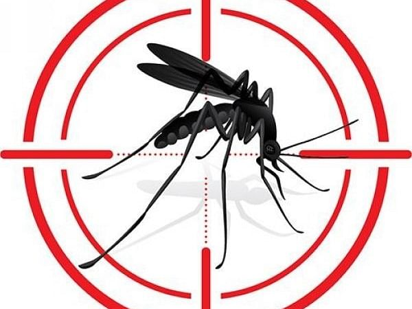 டெங்கு காய்ச்சல்... அறிகுறிகள், பரிசோதனைகள், சிகிச்சை முறைகள்! #DengueFeverFAQ