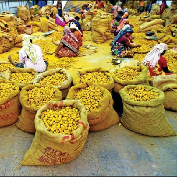 Agri Export for abundant income… Successful strategies! Part 8