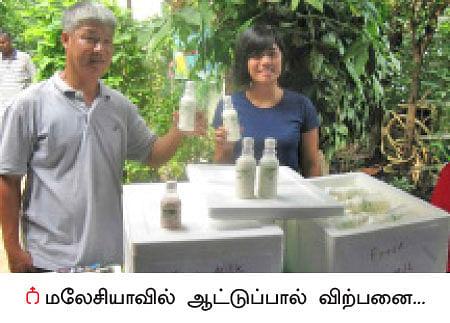 மண்புழு மன்னாரு: ஆட்டுப்பால்... மலேசிய மக்களின் மருந்து!