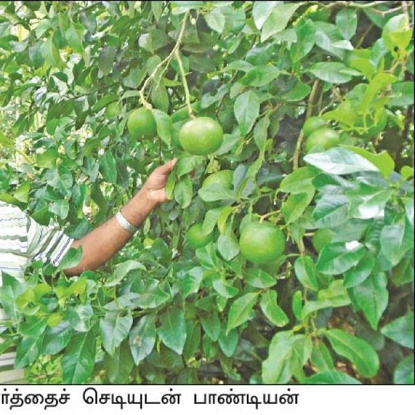 Amazing Hill Farming... ₹ 5.7 Lacs returns per year in 2 acres..!