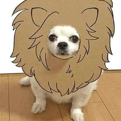 DOG டக்கர் - BAG BAG புக் பேக்
