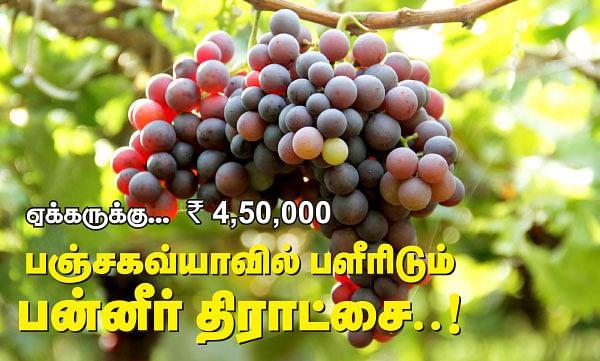 ஏக்கருக்கு... ரூ.4,50,000