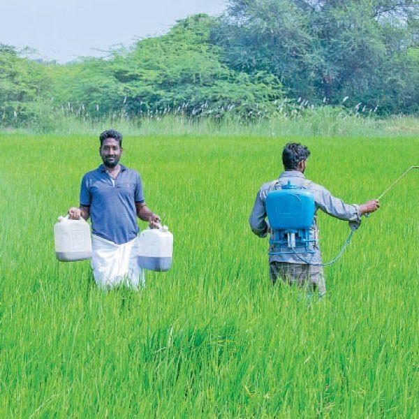 90% இயற்கை 10% ரசாயனம் - அசத்தும் ஆத்தூர் கிச்சிலிச் சம்பா!