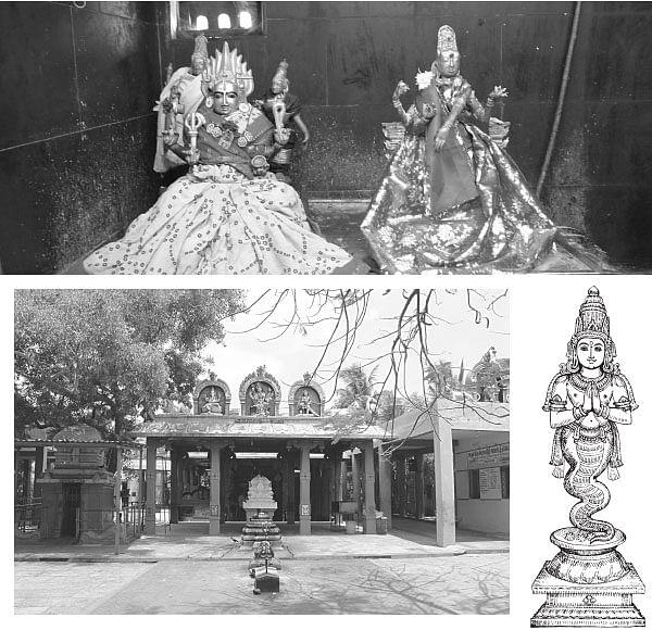 ராகு தோஷம் போக்கும் ஸ்ரீகோலவிழி அம்மன்!